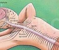 Noutati despre corpul uman